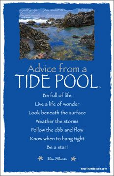 A Tide Pool shares its gems of wisdom found right beneath the surface of your reflection...