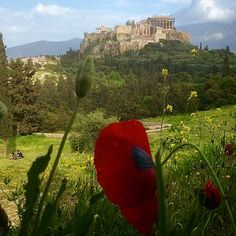 Pnyx and the Acropolis - Athens