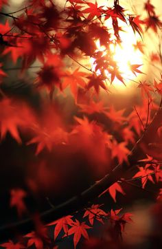 Spiraaal Of enchanting silence by Alexandre Deschaumes Macro Photography, Amazing Photography, Alexandre Deschaumes, Life Is Beautiful, Beautiful Places, Autumn Leaves, Red Leaves, Autumn Harvest, Autumn Home