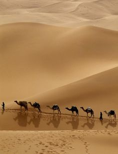 Our Morocco Desert Tours and Desert Tours from Marrakech to Fes are run on a daily basis. We offer cultural Morocco, Sahara desert tours with camel trekking Desert Dunes, Wallpaper Free, Desert Tour, Red River, City Photography, Beautiful World, Egypt, Cool Photos, Scenery
