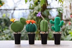 Crochet, knit and amigurumi. Crochet Cactus, Crochet Flowers, Crochet Animals, Crochet Toys, Crochet Things, Cacti And Succulents, Cactus Plants, Crochet Decoration, Cactus Y Suculentas