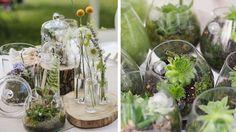 pots en verre plantes vertes