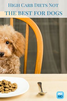 Did you know that if left to choose for themselves, dogs would choose a low carb diet? Find out more about this recent study!