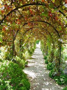 how to build a metal arbor for a wisteria vine