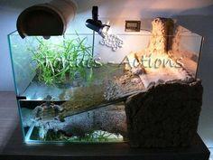 Aquatic Turtle Habitat, Aquatic Turtle Tank, Turtle Aquarium, Aquatic Turtles, Aquarium Fish, Aquarium Ideas, Turtle Care, Pet Turtle, Baby Turtles