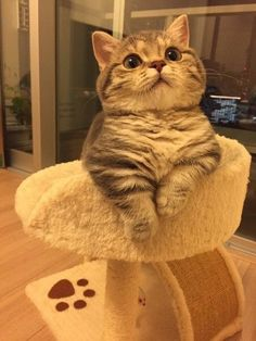 # beauty # beautiful - Cats and Dogs House Cute Cats And Kittens, I Love Cats, Crazy Cats, Cool Cats, Kittens Cutest, Cute Funny Animals, Cute Baby Animals, Animals And Pets, Wild Animals