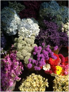 Colores impresionantemente vivos