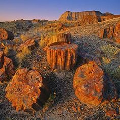 Petrified Forest National Park , AZ