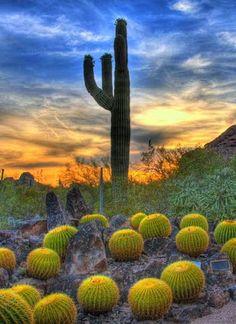 Scottsdale, Arizona..someday I'm going to go to the desert.