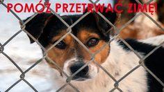 POGOTOWIE DLA ZWIERZĄTto organizacja społeczna. Codziennie ratujemy zwierzęta na terenie całej Polski. W interwencjach biorą udział wolontariusze którzy pracują na nich społecznie. Psy, konie i inne zwierzęta leczone są i utrzymywane z dobrowolnych datków. Bez POMOCYludzi dobrej woli Pogotowie ...