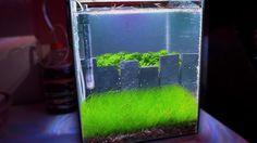 HOW TO: Making a NANO Crystal Red Shrimp Planted Aquarium | TonyTanks