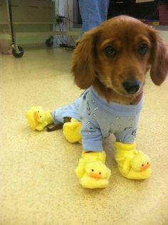 Pantuflas para perros