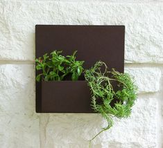 This modern steel wall planter adds flair and style to the facade of your home. Looks particularly great with colorful succulents! This planter is. Front Door Planters, Metal Wall Planters, Succulent Wall Planter, Contemporary Front Doors, Drought Tolerant Landscape, Colorful Succulents, Square Planters, Steel Wall, Desert Rose