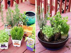 How to Make Your Own DIY Indoor Cat Garden #UltimateLitter (ad)