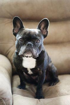 Puppy dog!