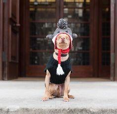 Isn't this the sweetest ever.I Love Tuna! Tuna Dog, Tuna Melts, Dog Names, Dog Training, Winter Hats, Crochet Hats, Puppies, Dogs, Fan