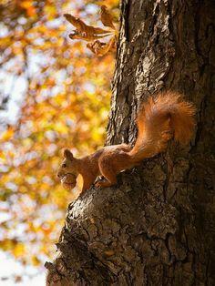 jingfenhwu's random finds squirrel, fall, autumn, tree