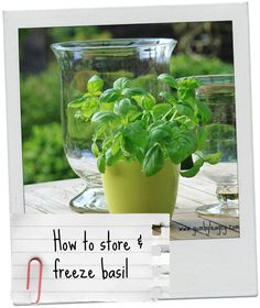 5 ways to store basil and other herbs to prevent them going slimy & disgusting in your fridge!