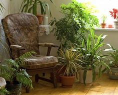 Houseplant Air Purifiers – What Are The Best Houseplants To Purify Air Living Room Decor, Simple Living Room, Living Room Plants, Home Living Room, Garden Projects, Indoor Plants Clean Air, Indoor Garden, Outdoor Gardens, Gardening Tips