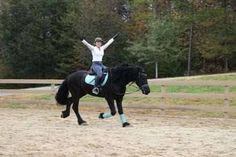 2012 16.2 HH OUTSTANDING quality Black Friesian Drivi Great Thinkers, Horse Names, London United Kingdom, Horses For Sale, Friesian, Horse Breeds, Dressage, Horse Racing, Picture Video