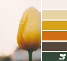 Flora colours