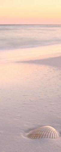 Ocean Sea Shell:  Seashell in white sand.