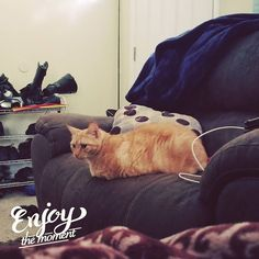 Looks like King of the Couch has begun! Move over Geoff and Sugar there's a new fatter contestant in the game and she is looking comfortable on her throne. #milo  #fatcat #couchsurfing
