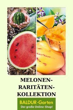 Melonen Raritaten Kollektion Obst Fur Pflanzkubel Bei Baldur Garten Melonen Melonen Pflanzen Obst
