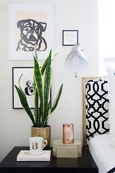 2. Snake Plant: Personality Trait: Strong, Independent Care Tips: Light- Thrives in bright light, to full sun. Will tolerate low light. Water- Water and allow to dry before watering again. Water just enough to moisten the soil, do not drench. Water along the edged of the pot, away from the centre of plant to avoid rotting at the base.