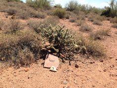 Cholla in Apache Junction AZ