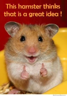 Team Member have a great idea? Show 'em with a fun note from the Great Idea Hamster.