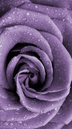 Power Wallpaper, Purple Wallpaper, Beautiful Rose Flowers, Floral Wall, Bold Colors, Flower Power, Walls, Wallpapers, Backgrounds