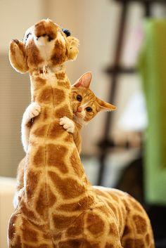 . by rampx on Flickr.giraffe