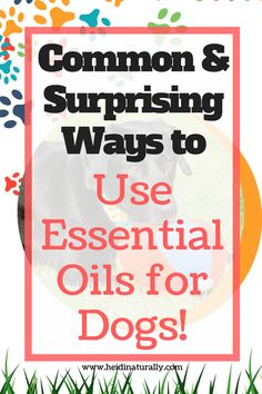 Find out how to use essential oils for dogs. Learn the best oils to use and how to use them with great success. Simple & effective for pets. via @heidinaturally