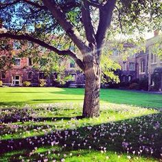 Queens College Cambridge Queen's College, How Beautiful, Cambridge, Queens, Wanderlust, Wedding Ideas, London, Places, Nature