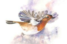 Robin Print of watercolour painting