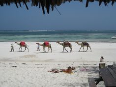 Mombasa - Take some time off with friends or family and visit the beautiful beaches, home to thousands of sea creatures.