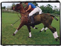 Polo style + organic/animal elements
