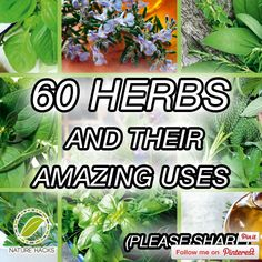 We can go back centuries and see how the ancient Chinese perfected the art of using herbs as medicine.  In this comprehensive guide, you'll learn about 60 specific herbs and their amazing benefits on your health, mood and overall wellness. See the list at naturehacks.com here… 60 Herbs And Their Amazing Uses Related Posts:How To …