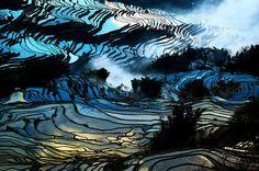 Pirinç Dünyası