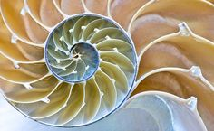 Nautilus - this counter-clockwise spiral takes you deep within.  Spirals...