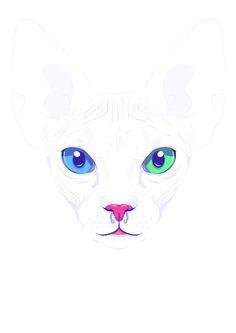 Cute sphynx cat