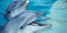 Afbeeldingsresultaat voor dolfijnen