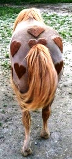 #Horse with shaved# heart shapes