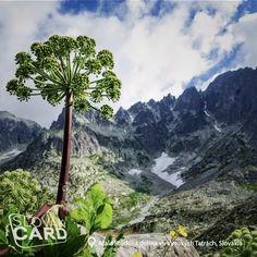 National Parks, Mountains, Nature, Travel, Naturaleza, Viajes, Destinations, Traveling, Trips