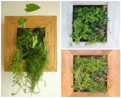 #Frame, #Garden, #Living, #Natural, #Organic, #Planter, #Plants, #Recycled, #Vertical, #Wood Restored demolition wood, scrap wood from furniture among other types of salvaged wood are used to create mini indoor vertical gardens with an irrigation system to facilitate maintenance and not dirty walls or floor. Helping visual harmony space