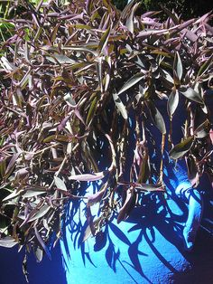 Morocco Plants