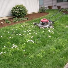 hobbs  hopkins . protime lawn seed - fleur de lawn