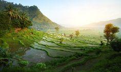 A rice terrace in Ba