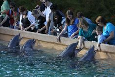 The Dolphin Cove